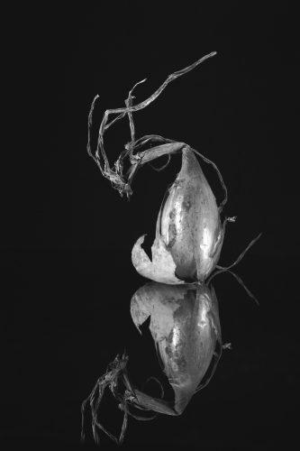 food picture black and White picture raw Olivier Tourlet légumes photo noir et blanc