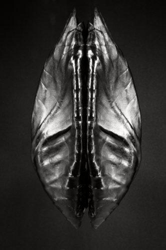 #mask of nature #Raw food #fantastic art olivier Tourlet