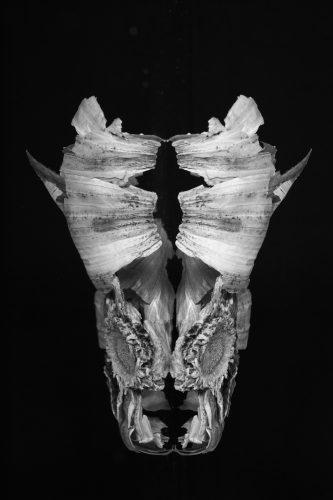 mask of nature Raw food fantastic art olivier Tourlet